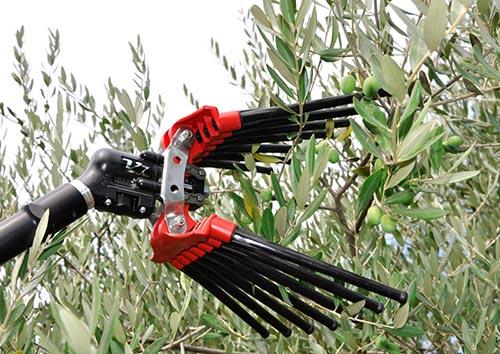 Scuotitore olive ad aria compressa